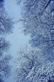 Snowy branches. Winter night background snowy branches Stock Photo