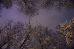 Snowy branches. Winter night background snowy branches Royalty Free Stock Images