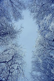 Snowy branches. Winter night background snowy branches Royalty Free Stock Image