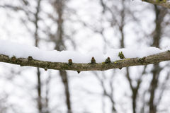Snowy Branches. Winter Tree. Nature in winter. Winter. Snowy Branches. Winter Tree. Nature in winter Stock Images