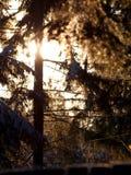 Snowy Branches1 Stockbild