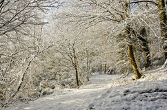 Snowy bridleway Royalty Free Stock Photo