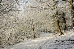 Snowy bridleway Fotografia Stock Libera da Diritti