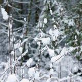 Snowy-Brunchs Stockfoto