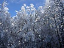 Snowy-Buche Lizenzfreie Stockfotografie
