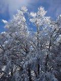 Snowy-Buche Stockfoto