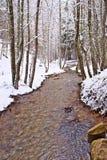 Snowy-Buche und Kiefernwald im Spätwinter, Nationalpark Sila, Kalabrien, Süd-Italien stockfotos