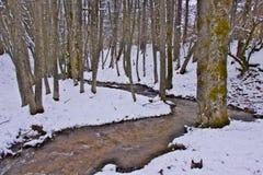 Snowy-Buche und Kiefernwald im Spätwinter, Nationalpark Sila, Kalabrien, Süd-Italien stockbild