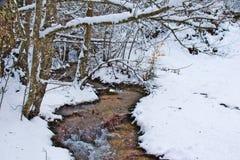 Snowy-Buche und Kiefernwald im Spätwinter, Nationalpark Sila, Kalabrien, Süd-Italien stockfotografie