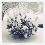 Snowy Busch Lizenzfreies Stockbild