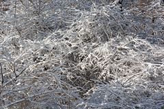 Snowy bushes. Stock Image