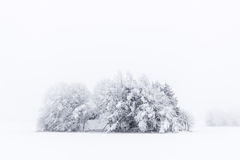 Snowy Cabin and Trees in the fog Stock Photos