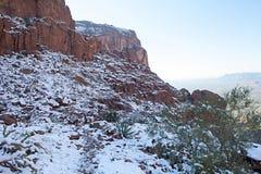 Snowy Cactus in Phoenix Stock Images