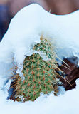 Snowy Cactus - Rare Arizona Storm Royalty Free Stock Photos