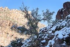 Snowy Cactus - Rare Arizona Storm Royalty Free Stock Image