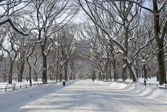 Snowy Central Park Mall. The snow covered trees in the mall area of Central Park in New York City Royalty Free Stock Images