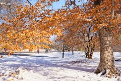 Snowy Central Park in New York City royalty free stock image