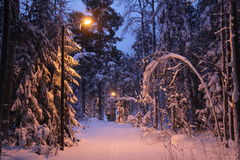 A snowy Christmas forest. View with snow-filled trees, lights and icicles at twilight in a nature reserve near Stockholm, Sweden Royalty Free Stock Images