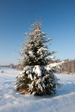 Snowy Christmas tree Royalty Free Stock Photography