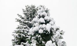 Snowy Christmas Tree Stock Photography