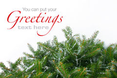 Snowy Christmas tree branches Stock Photos