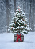 Snowy Christmas Tree with Colorful Lights in a Forest Royalty Free Stock Photography