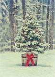 Snowy Christmas Tree with Colorful Lights in a Forest - Vintage Stock Photos