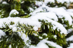 Snowy Christmas tree. Detail of a fir under the snow Stock Photography