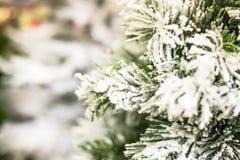 Snowy Christmas Tree Royalty Free Stock Image
