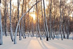 Snowy City Park. Frosty sunny morning in a snowy city park Royalty Free Stock Images