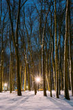 Snowy city park in light of lanterns at evening. Winter Royalty Free Stock Images