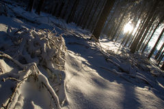 Snowy and cold sunny winter forest Stock Photo