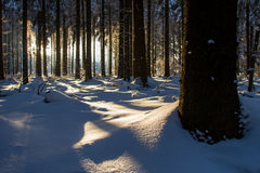 Snowy and cold sunny winter forest Royalty Free Stock Photography