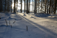 Snowy and cold winter forest Royalty Free Stock Photo