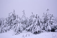 Snowy cold winter forest Stock Photography