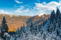 Snowy conifer forest in mountains. Beautiful nature scenery in evening light Stock Photos