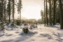 Snowy conifer tree forest Stock Photos