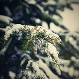 Snowy coniferous Christmas tree. Concept for winter and Christmas time royalty free stock photos