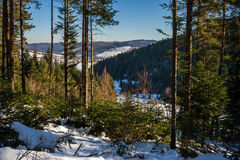 Snowy coniferous forest in mountains. Winter mountain landscape. pine forest covered with snow stock photography