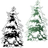 Snowy Coniferous Tree Stock Photos