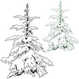 Snowy Coniferous Tree Stock Images