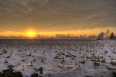Snowy cornfield Sunset Royalty Free Stock Images