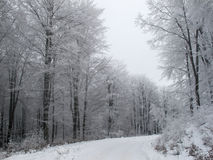 Snowy country road and frosty trees Stock Photos