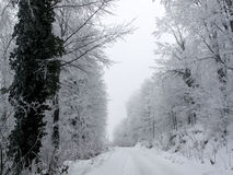 Snowy country road and frosty trees Stock Images