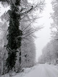 Snowy country road and frosty trees Royalty Free Stock Photo