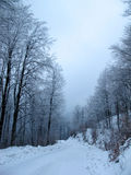 Snowy country road and frosty trees Royalty Free Stock Image