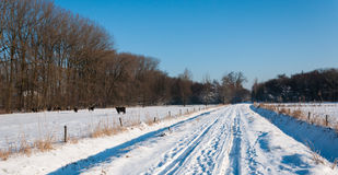 Snowy country road between the meadows Stock Photography