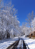 Snowy country road in the sun Royalty Free Stock Photos