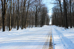 Snowy Country Road Royalty Free Stock Photo