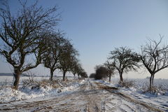 Snowy country in a sunny winter day Royalty Free Stock Photo
